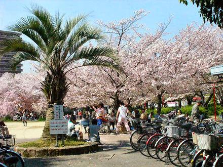 桜のある公園 その1