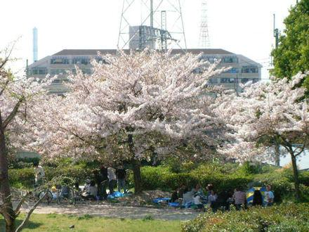 桜のある公園 その2