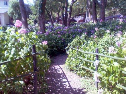 第一紫陽花苑 その2