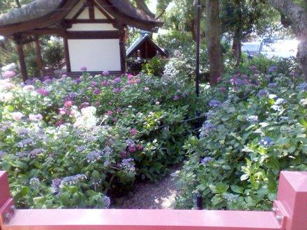 第二紫陽花苑 その1