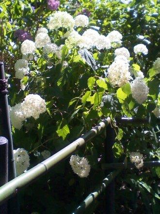 第二紫陽花苑 その2