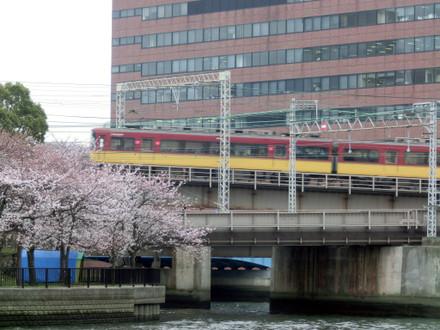 桜と京阪特急9000系