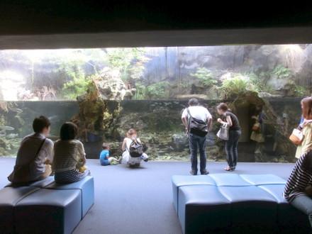 由良川を模した水槽