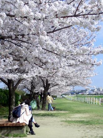 奥へと伸びる桜の天井