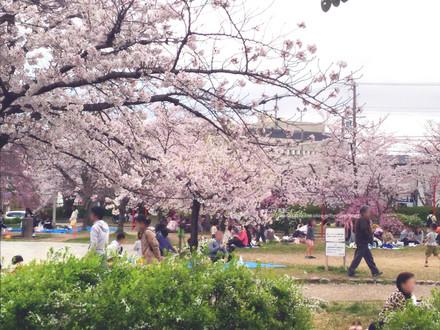 桜と花見をする人たち