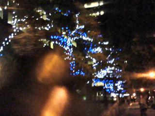 電飾された木々