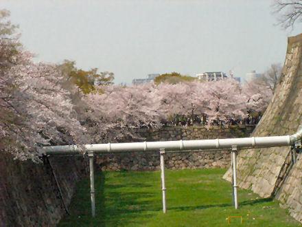 内濠と西の丸庭園の桜