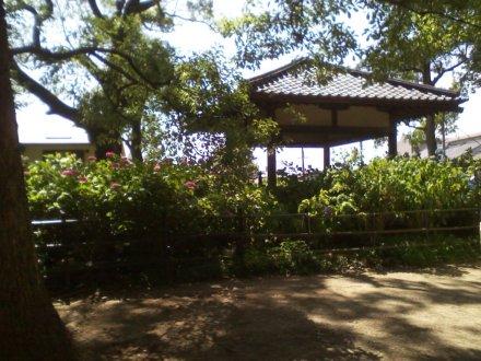 参道から見える第一紫陽花苑
