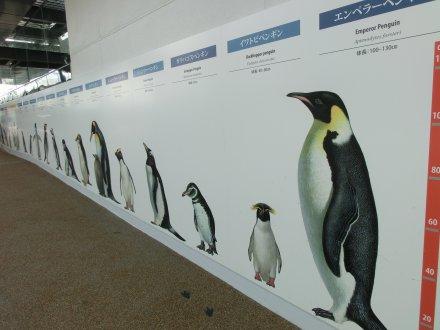 ペンギン各種の絵