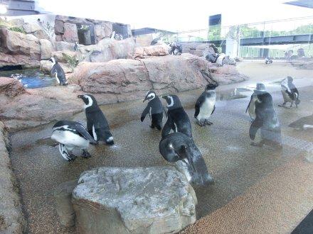 ペンギンのための砂場